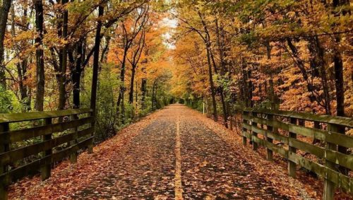 Monon trail covered in leaves and surrounded by trees changing colors